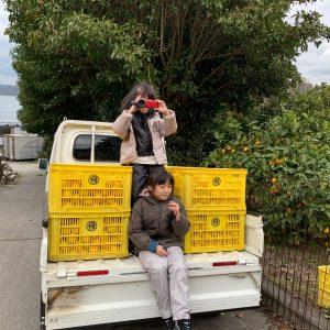 台湾からレモンボランティア