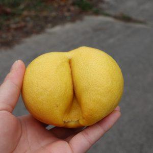 おしりレモン
