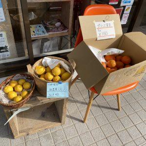 とびしま.cafeから柑橘入荷のお知らせ