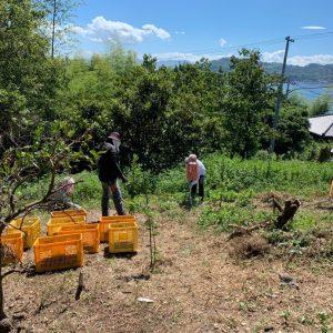 耕作放棄地再生ボランティア募集 愛とレモンで島おこし