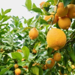 秋山那由他さんyoutube 広島とびしま海道レモンの魅力発信