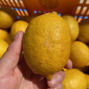オンラインショップからレモンの状況についてお知らせ