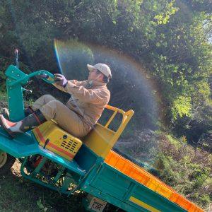 耕作放棄地再生 園地開拓 レモン栽培